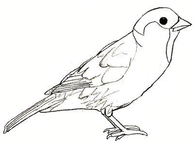 400x295 How To Draw A Sparrow