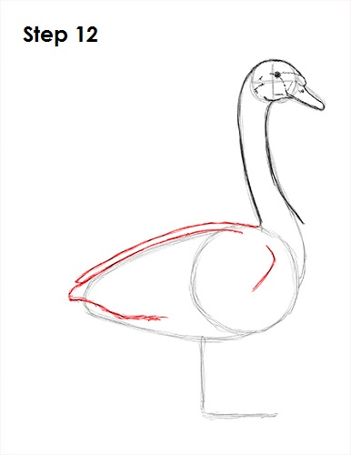 386x500 How To Draw A Swan