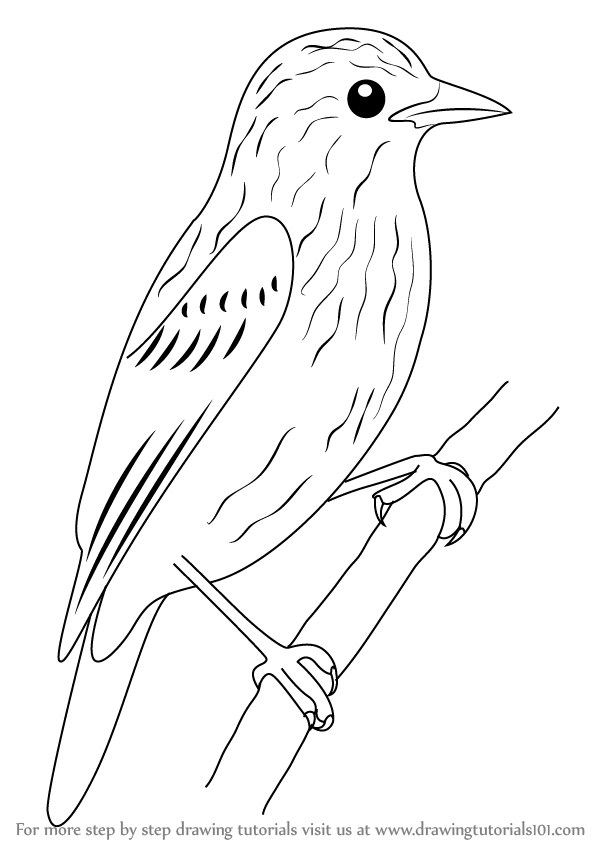 598x841 Learn How To Draw Xenops (Birds) Step By Step Drawing Tutorials