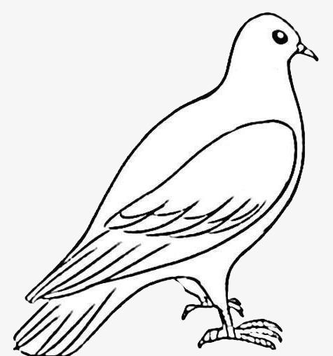 475x508 Stick Figure Dove, Jane Pen, Pigeon, Cartoon Png Image For Free