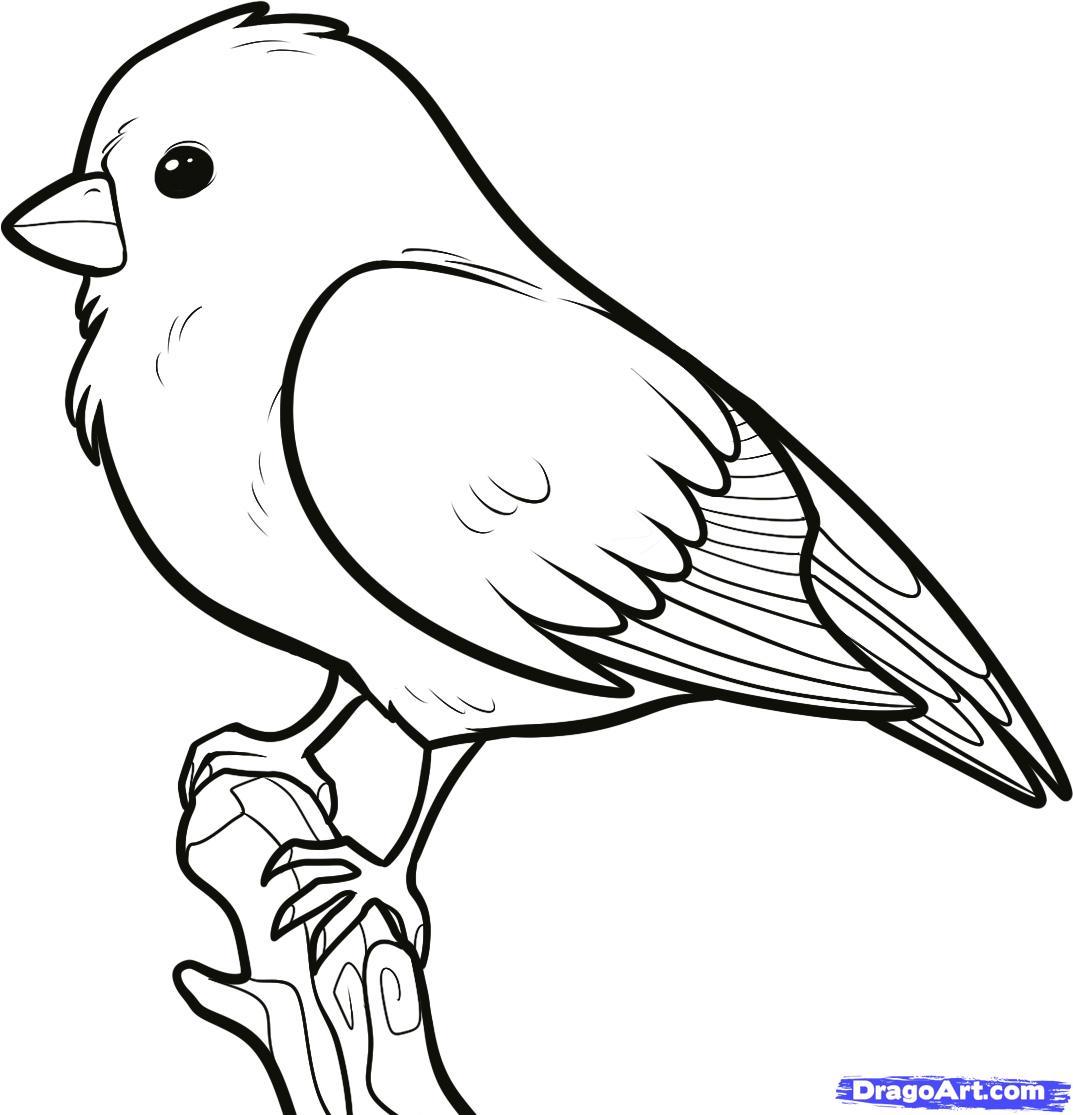 1073x1115 How To Draw A Songbird, Songbirds Step 6 Birds!