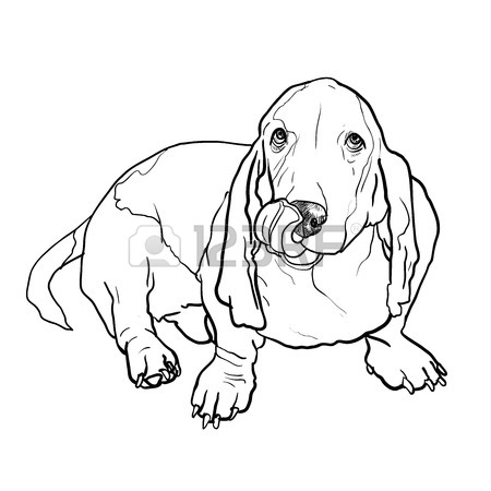 450x450 Adorable Basset Hound Dog Sitting And Stick Out It's Tongue