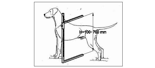 651x284 Dog's Measuring Stick Ziiu Standart