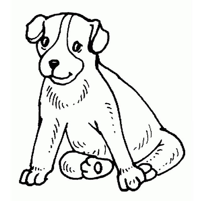 650x640 Dog Template