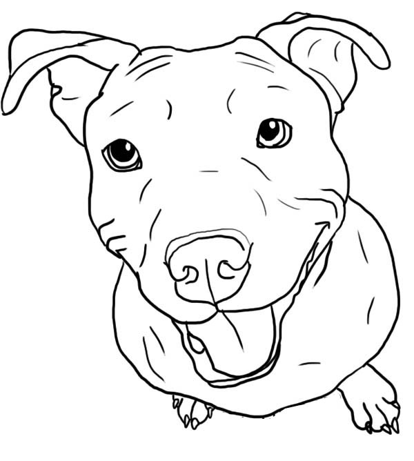 600x668 Pitbull Coloring Pages Amazing 30 On Free