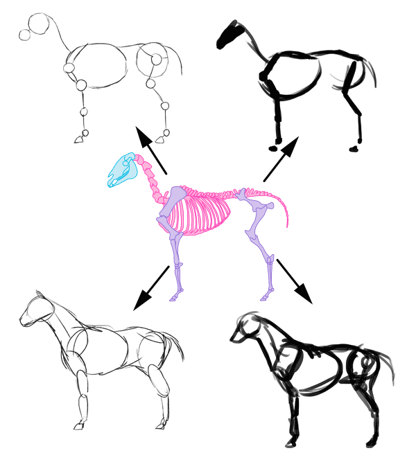600x667 How To Draw Animals The Importance Of Drawing A Pose