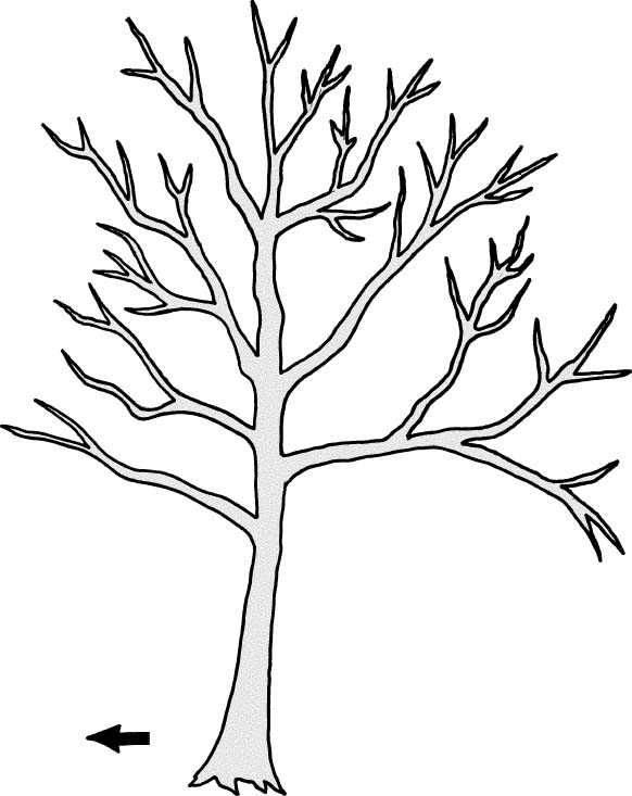 stick tree drawing at getdrawings com free for personal use stick