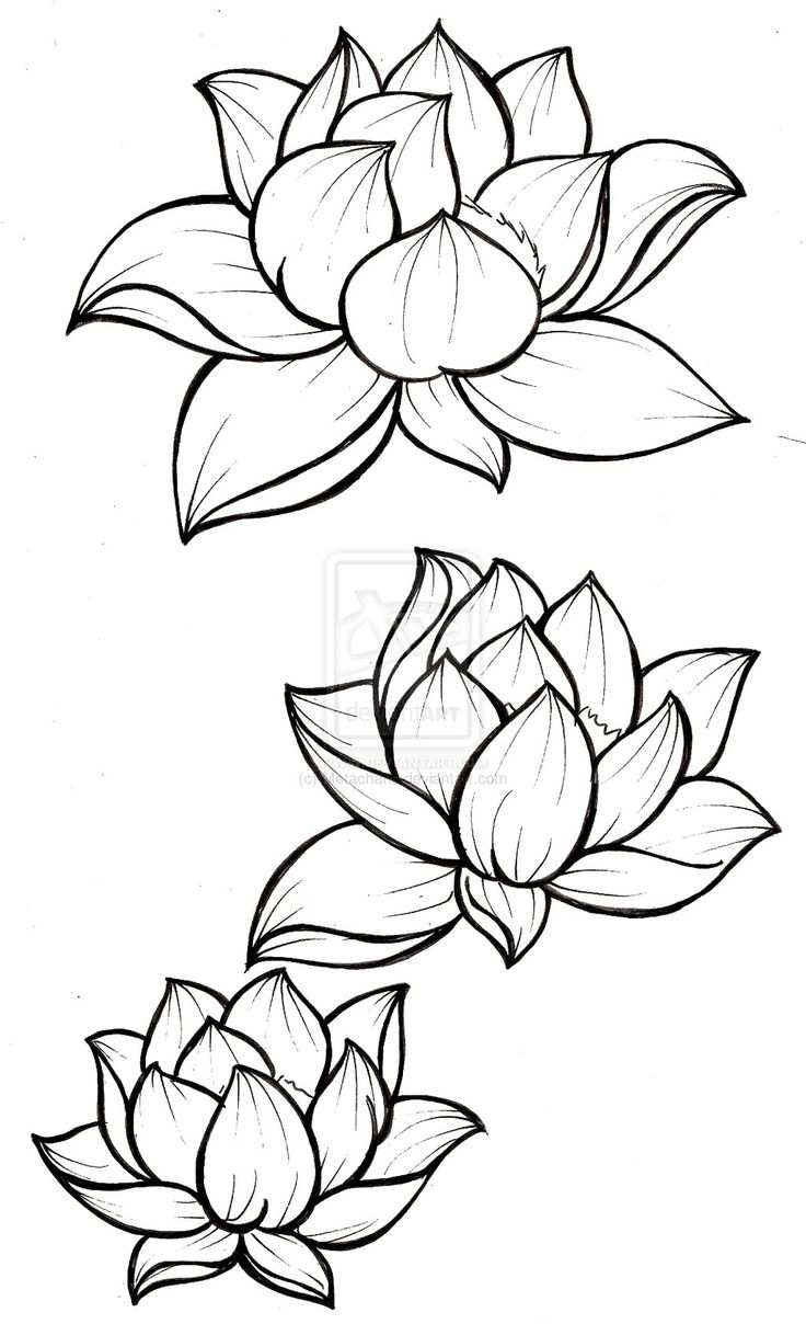 736x1208 Simple Lotus Flower Drawing 15 Stiletto Nail Designs To Try Out