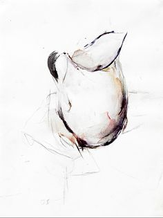 236x315 Pen And Ink Wash Still Life Drawings