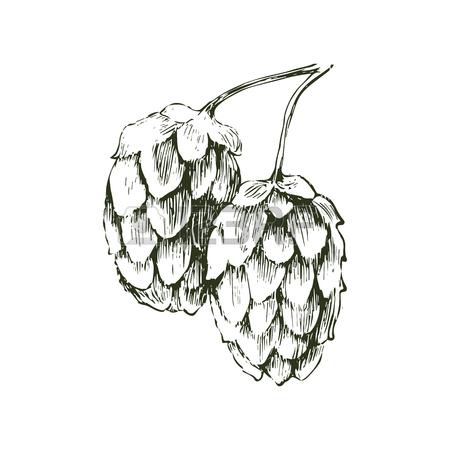 Still Life Fruit Drawing