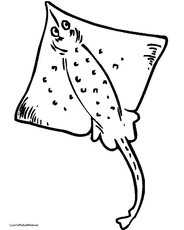 sting ray drawing at getdrawings com