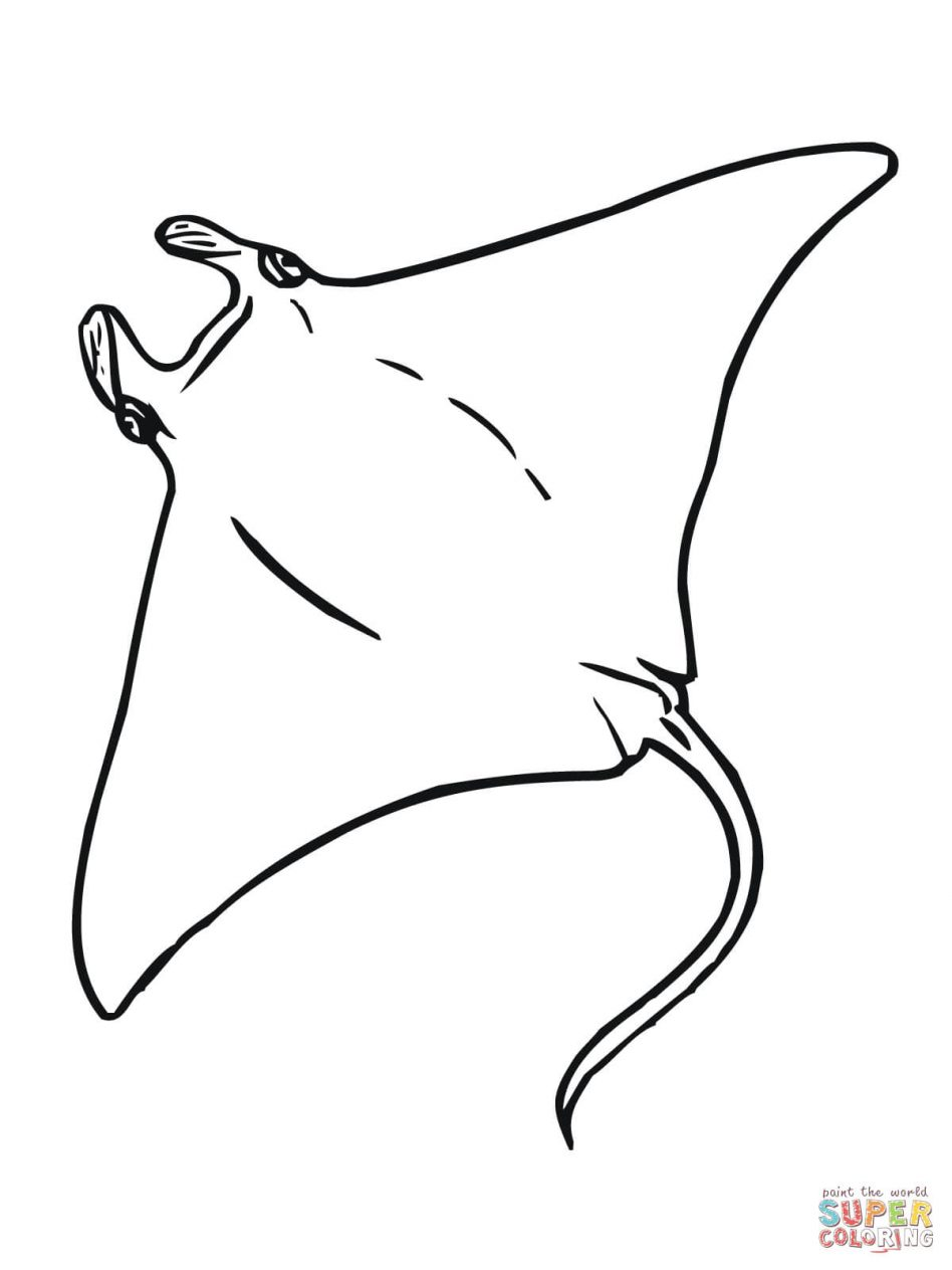Stingray Drawing At Getdrawings Com Free For Personal Use Stingray