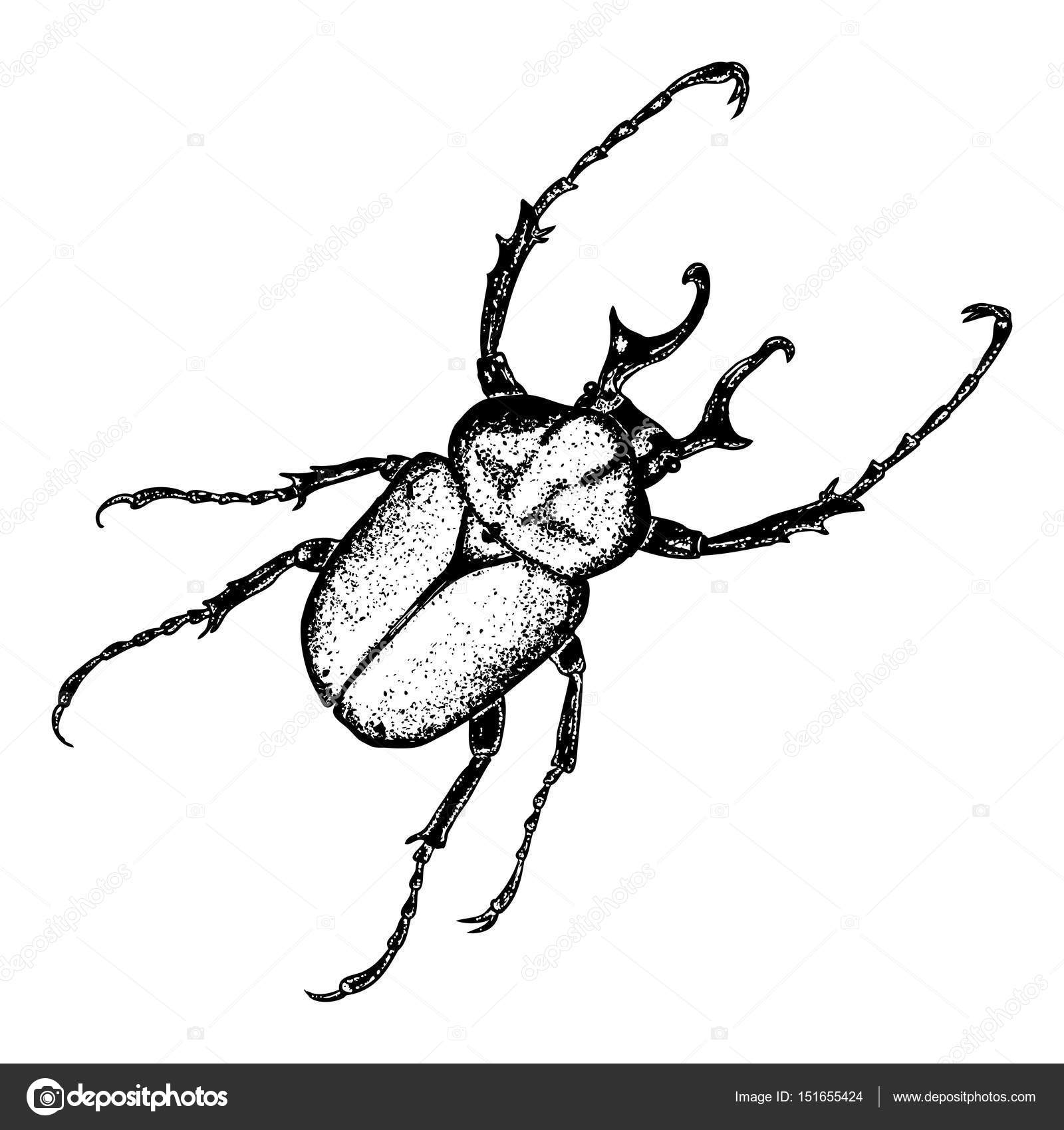 1600x1700 Insect Stipple Drawing Set Isolated Stock Vector Goldenshrimp