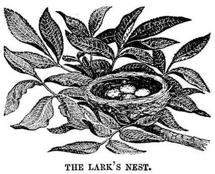 426x346 Lark Nest Drawing