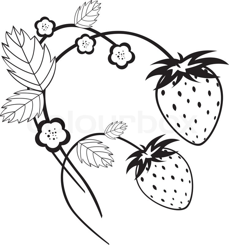 strawberries drawing at getdrawings com free for personal use