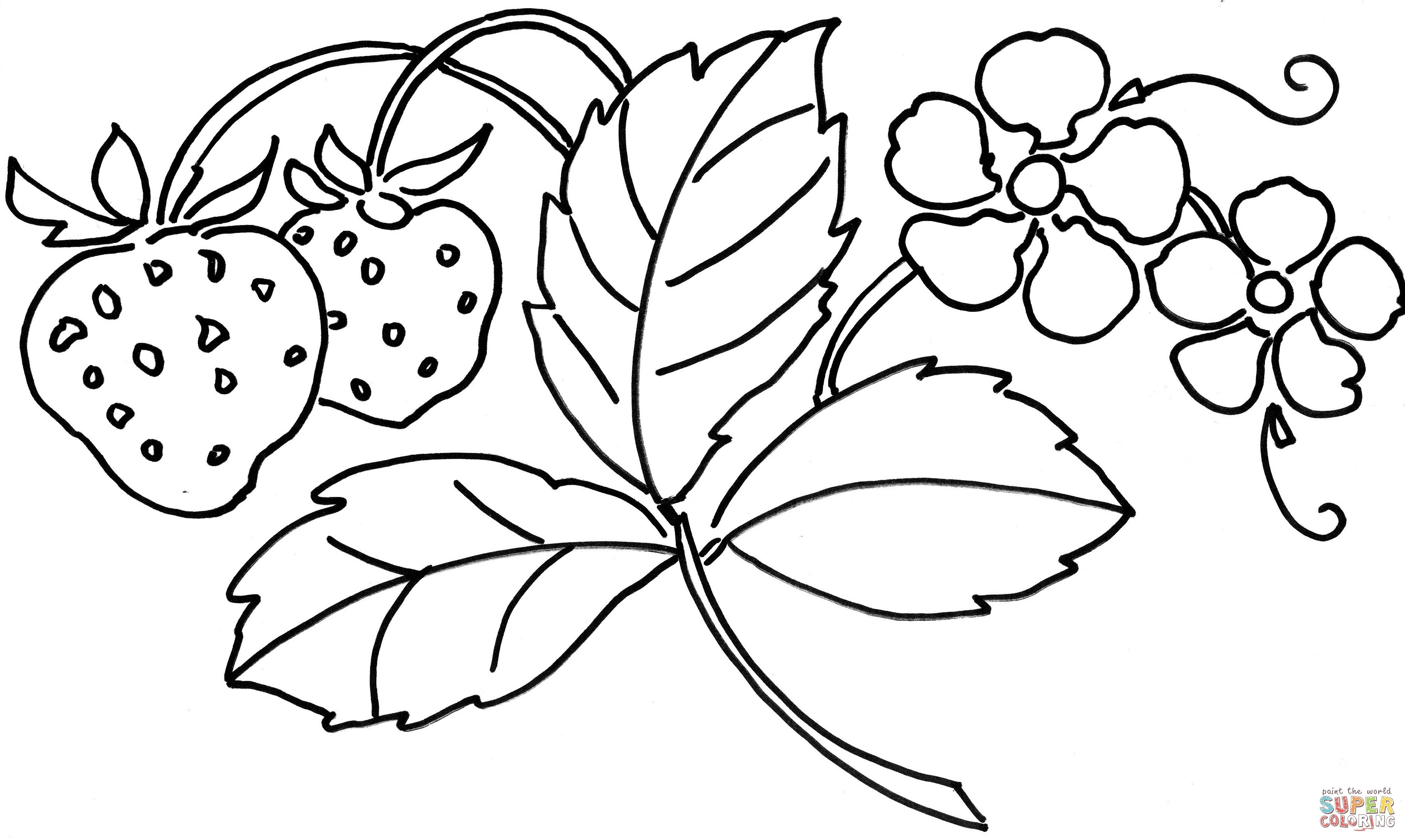 3420x2045 Pretty Flower Coloring Pages Inspirational Strawberry Flower