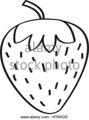 300x405 Strawberry Fresh Fruit Drawing Icon Stock Vector Art