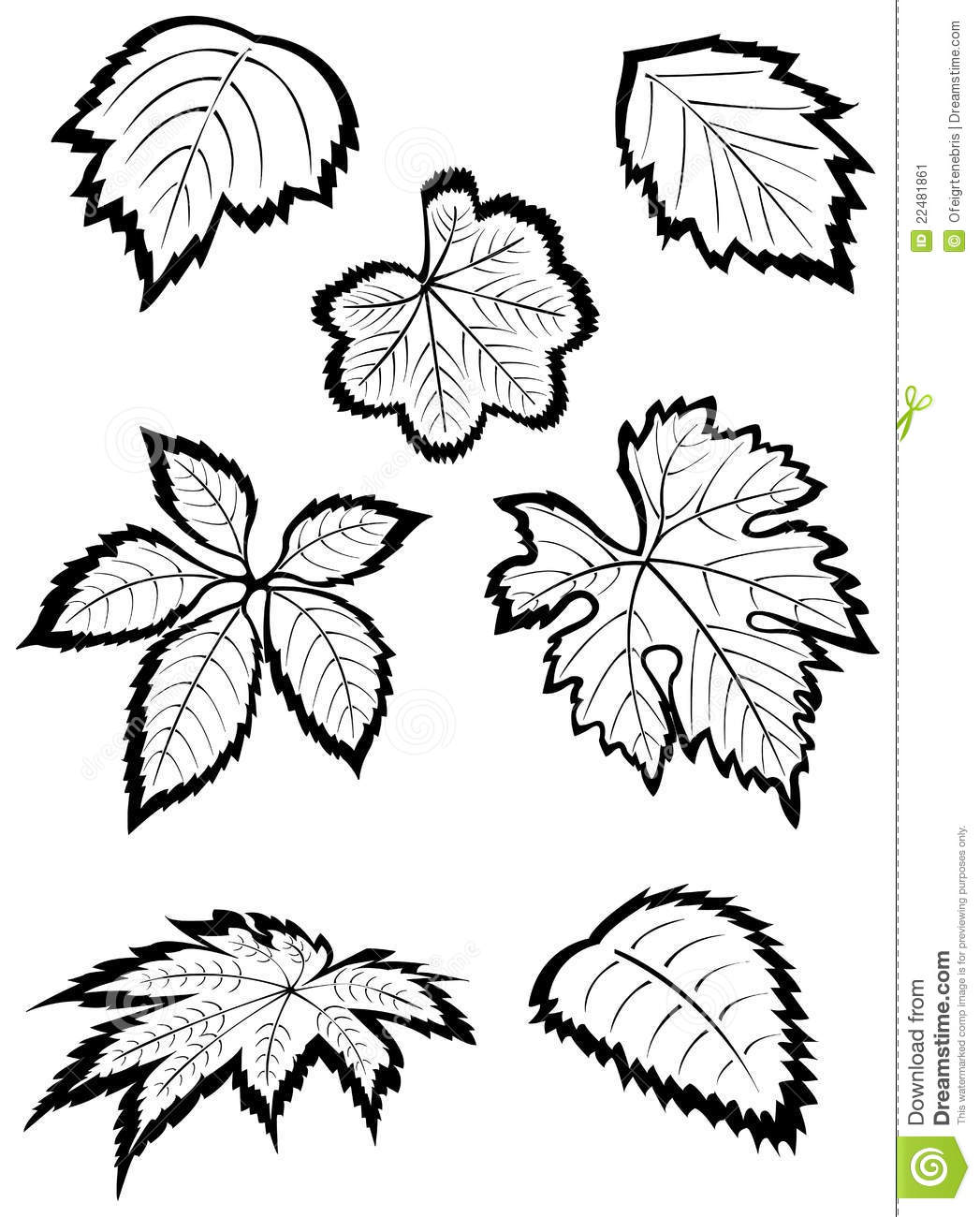 1047x1300 Drawn Foliage Strawberry Leaf