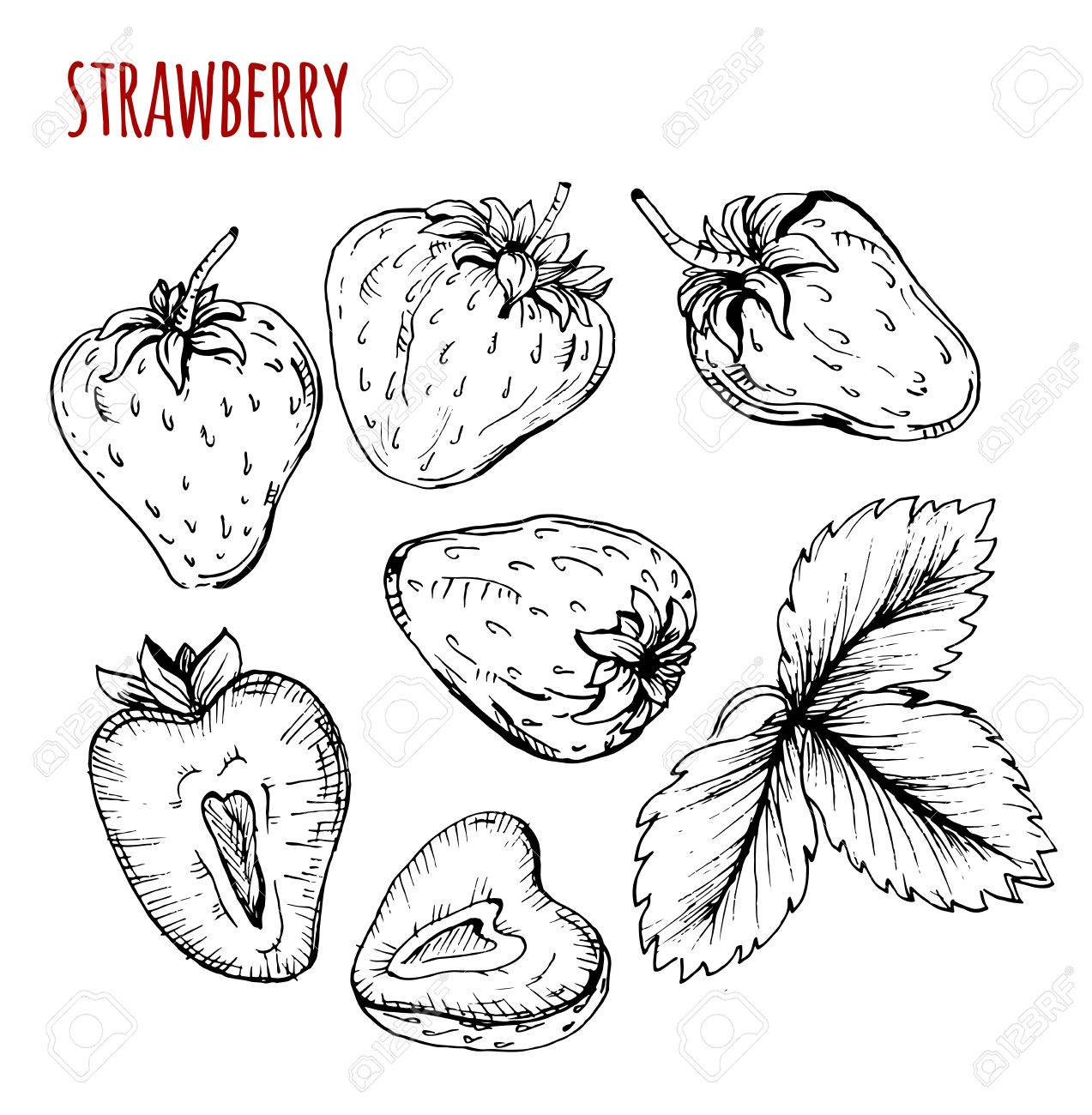 1273x1300 Set Strawberry Drawing. Strawberry On A White Background. Vector