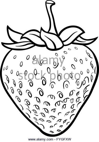 377x540 Strawberry Drawing Stock Photos Amp Strawberry Drawing Stock Images