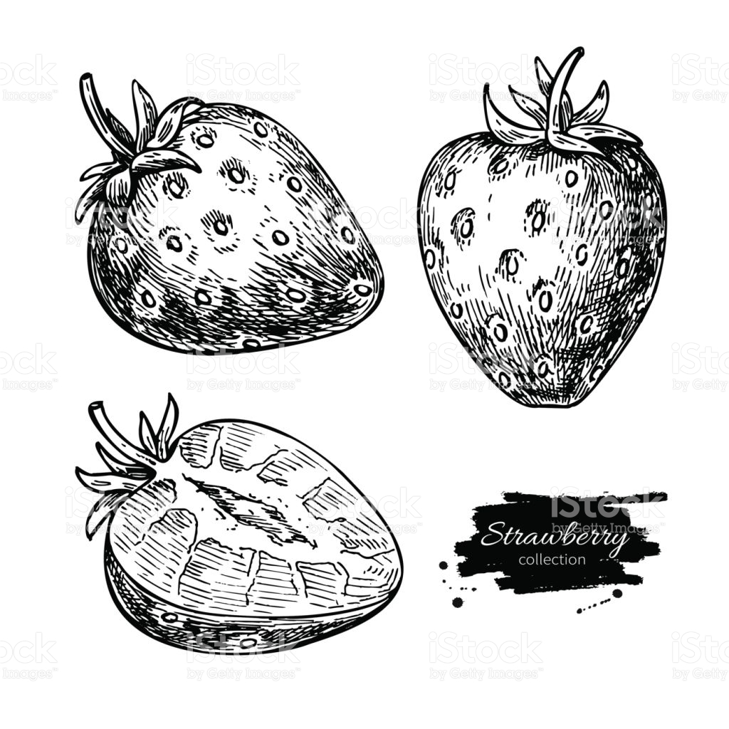 1024x1024 Drawn Berry Strawberry Line