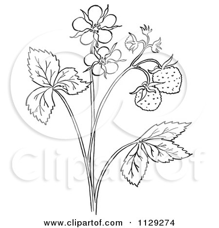 450x470 Cartoon Clipart Of An Outlined Strawberry Plant With Blossoms