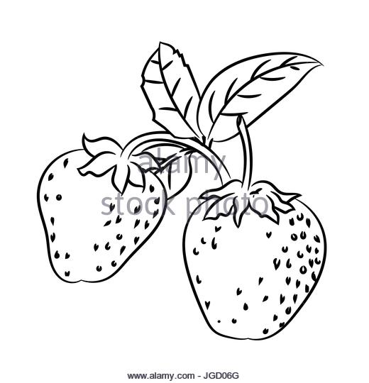 520x540 Strawberry Hand Drawn Stock Photos Amp Strawberry Hand Drawn Stock