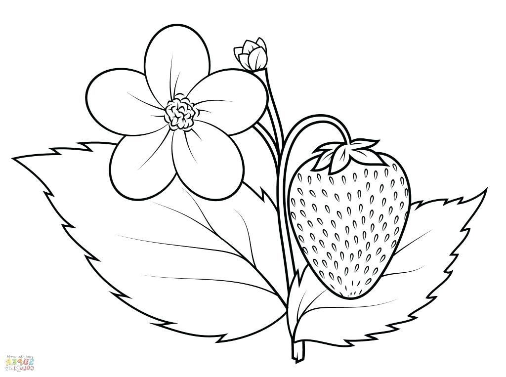 1024x763 Here Are Strawberry Coloring Page Pictures Strawberry Coloring