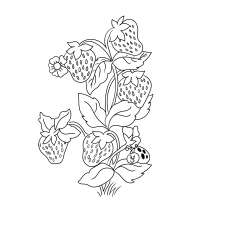 strawberry plant drawing at getdrawings com free for personal use
