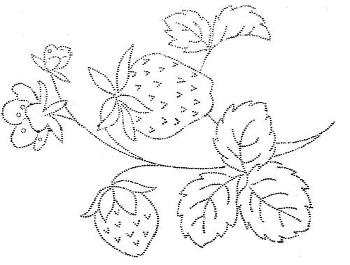 Strawberry Vine Drawing