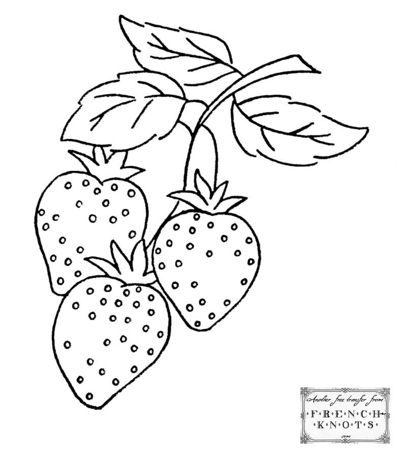 800x918 Grapes, Vines, Wheat And Strawberries Embroidery Transfer Patterns