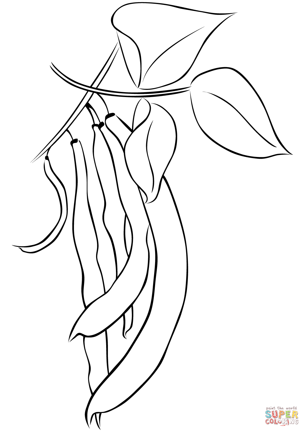 String Beans Drawing at GetDrawings.com | Free for ...