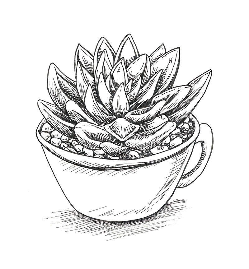 800x865 Succulent Cup By Ms Aibee