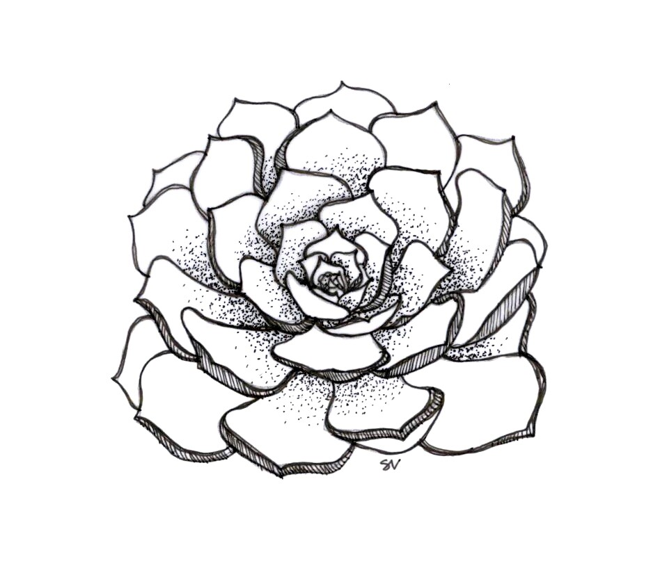 948x840 Succulent Sketch Tutorials Sketches, Artsy Fartsy