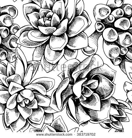 450x470 Black And White Succulent Drawing