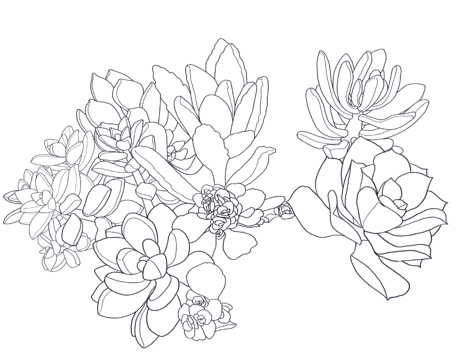 955x736 Cniska Have Decided On Succulents For My Business Card Stay