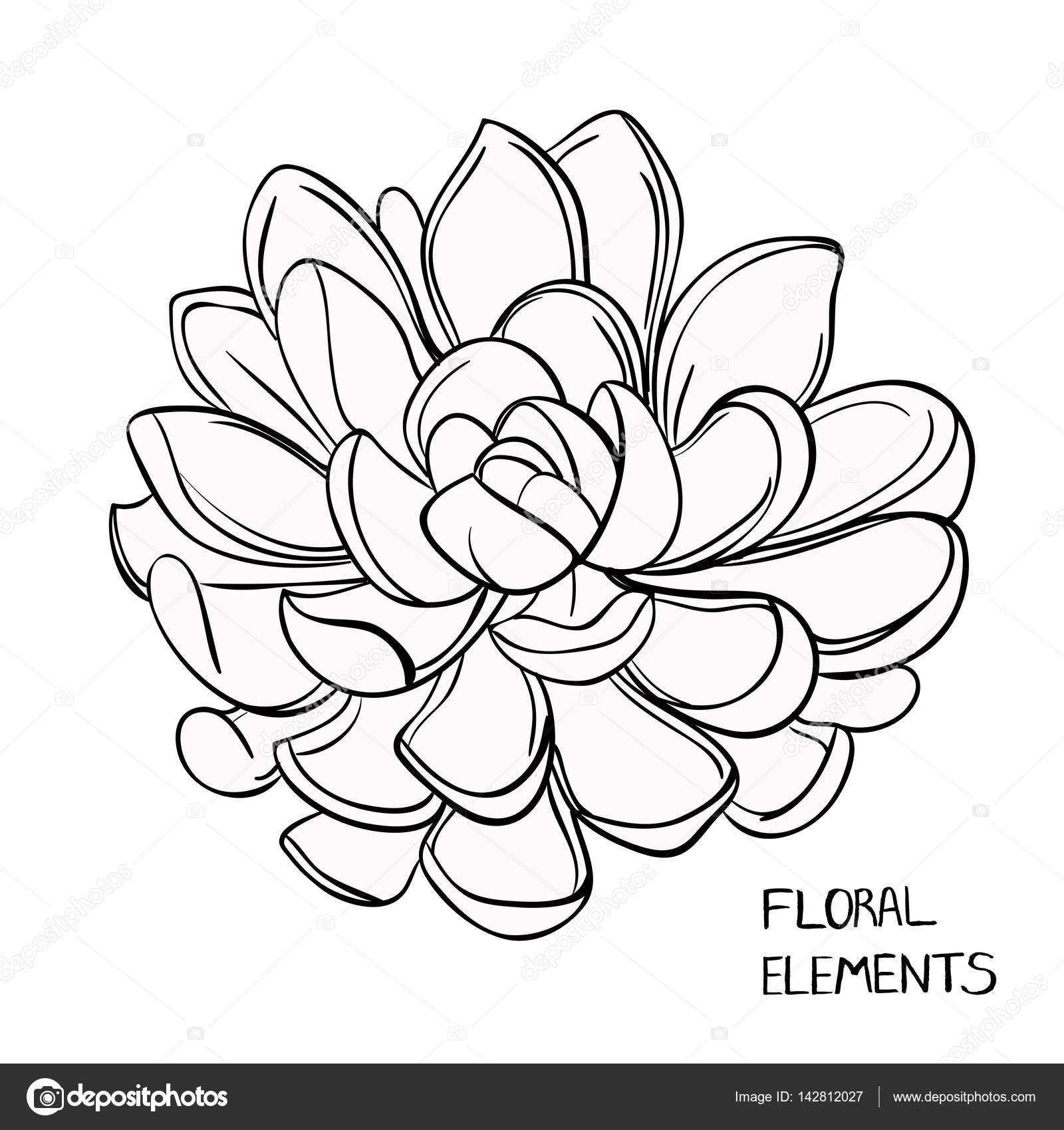 1600x1700 Black And White Succulent Stock Vector Hikarud88