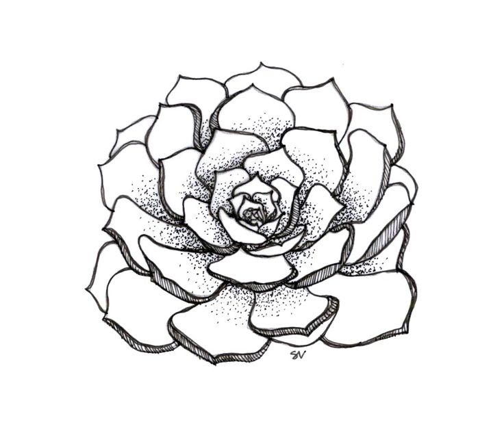 736x652 Tumblr Succulents Drawing