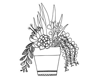 Succulent Plant Drawing at GetDrawingscom Free for personal use