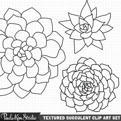 480x480 Grungy Succulents Paula Kim Studio