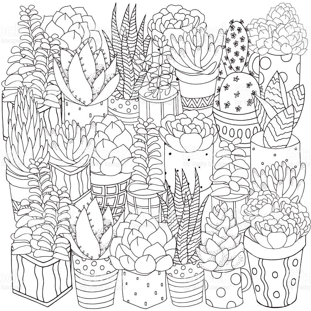 1024x1024 Hand Drawn Set Of Succulents, Cactuses And Pots. Doodles Elements