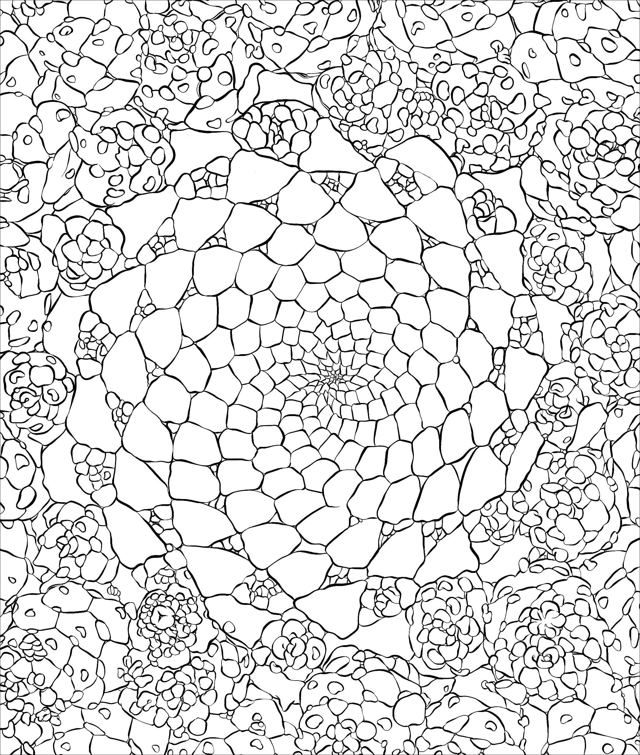 2100x2475 Sensational Succulents An Adult Coloring Book Of Amazing Shapes