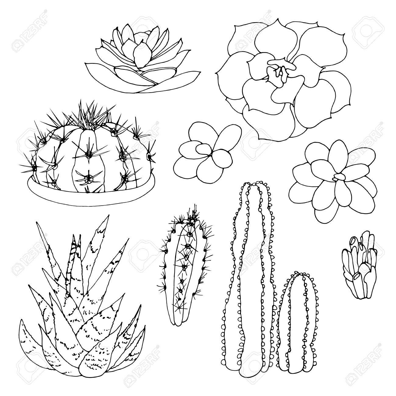 1300x1300 Set Of A Black And White Hand Drawn Cactus And Succulents Isolated