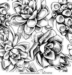 236x246 Succulent Drawings