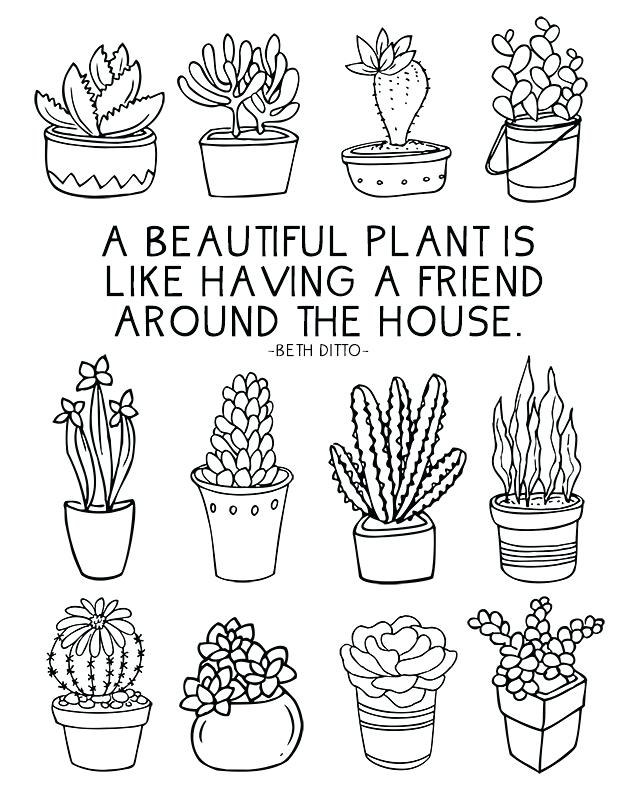 640x800 Cactus Coloring Page Fun Coloring Sheet Full Of Succulents