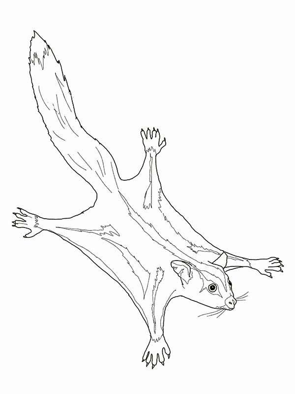 600x800 Sugar Glider Possum Coloring Page Color Luna