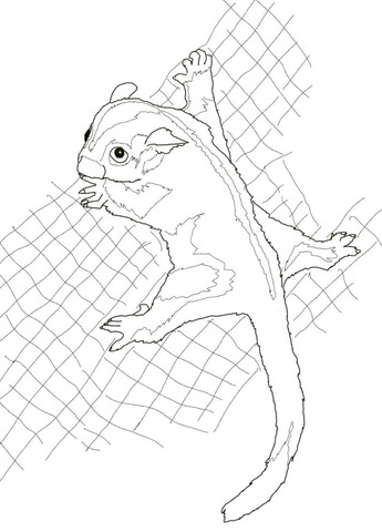 345x480 Sugar Glider Coloring Page Free Printable Coloring Pages