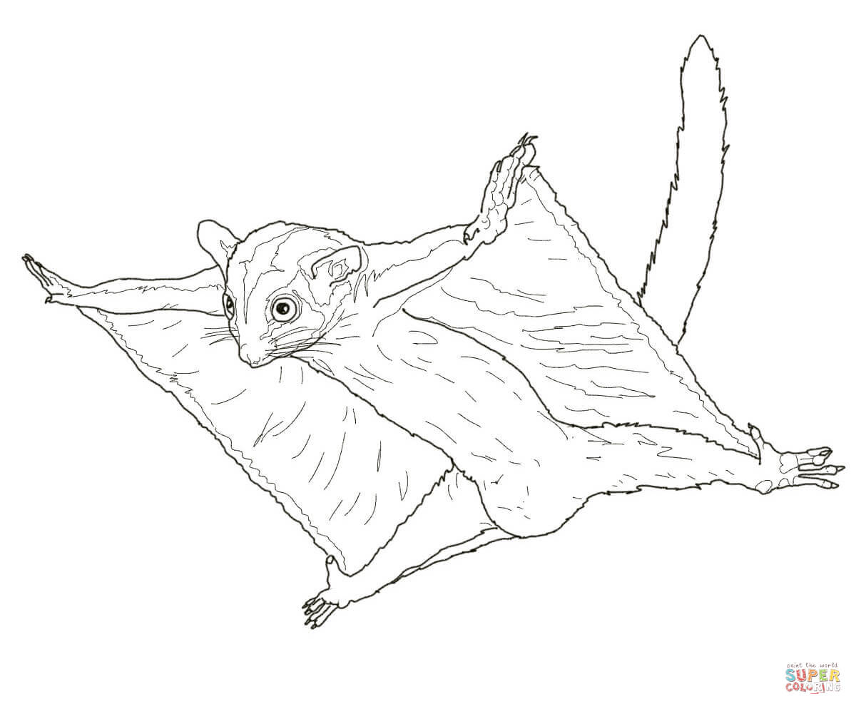 Sugar Glider Drawing at GetDrawings.com | Free for personal use ...