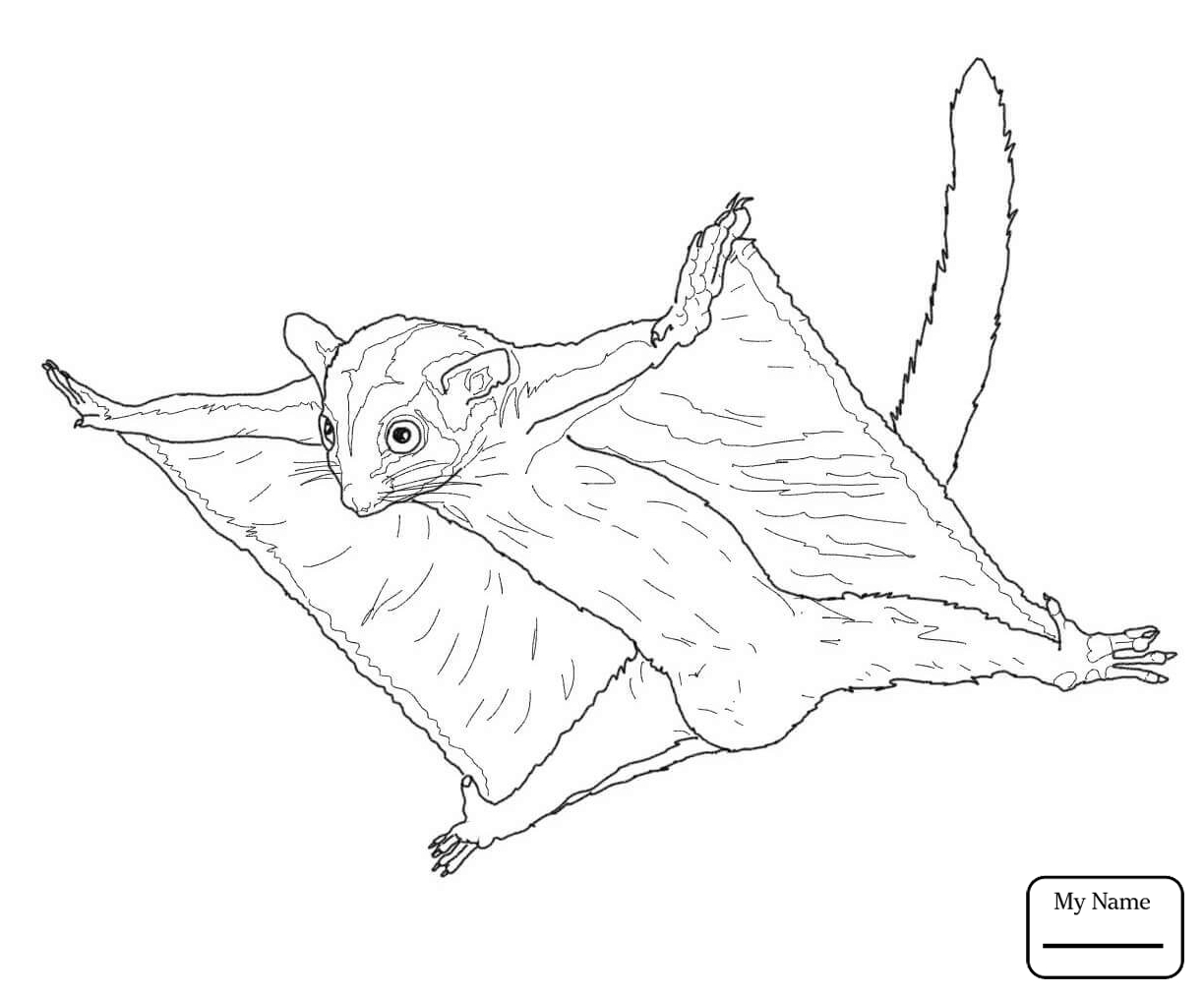 1224x1014 Coloring Pages For Kids Sugar Glider Flying Mammals