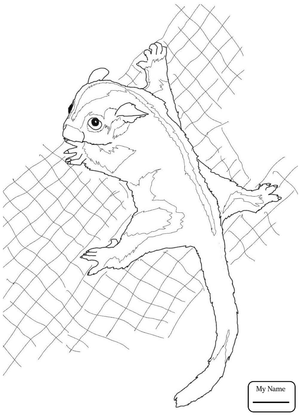 1010x1406 Coloring Pages Mammals Sugar Glider Possum Glid On Free Beanie Boo